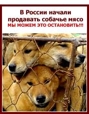 Мы можем это остановить!!! В России стали официально продавать собачье мясо.