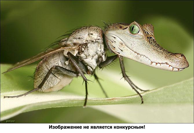 Крокодиловый комар