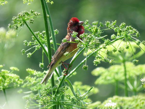 кзотическая птица