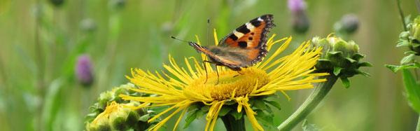 бабочка в Измайлово