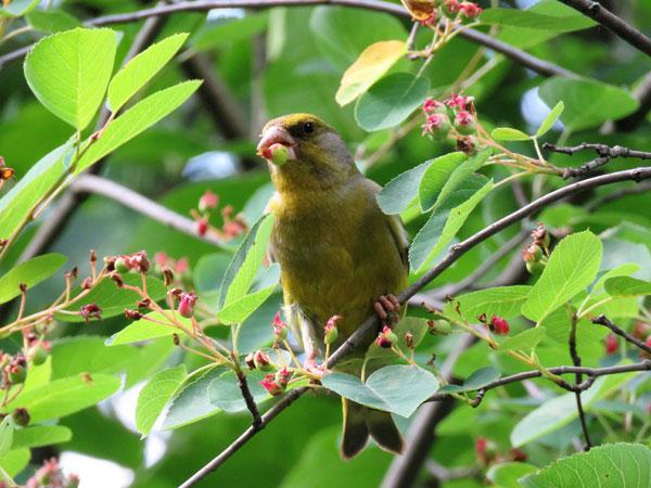 Птицы в Измайловском лесу