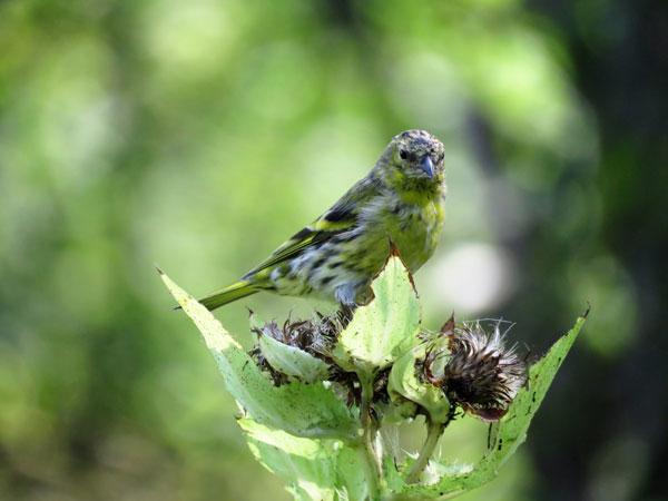 Птицы Измаловского леса